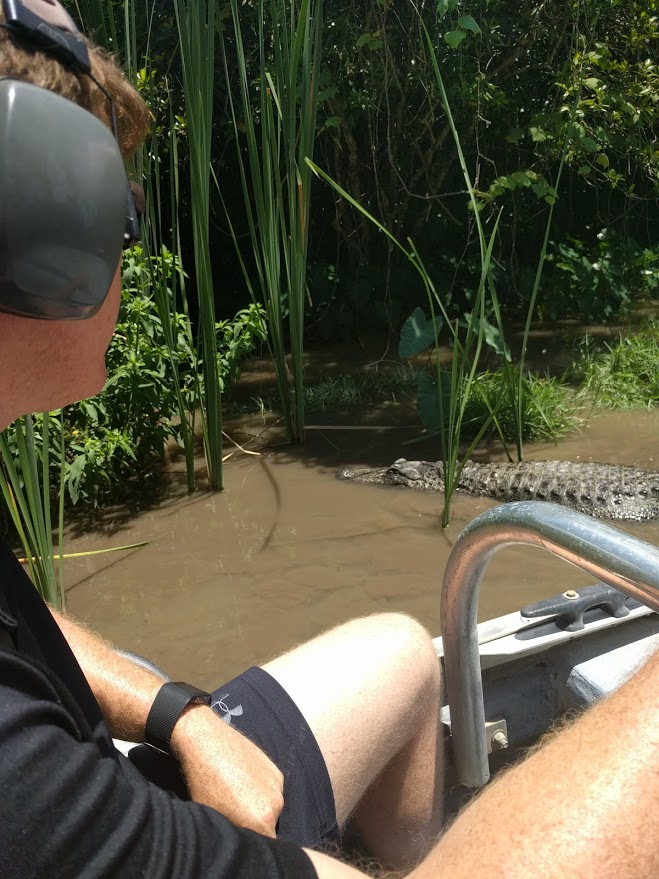 Seeing an alligator from the airboat in the Everglades