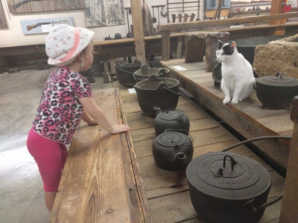 cat ignoring child