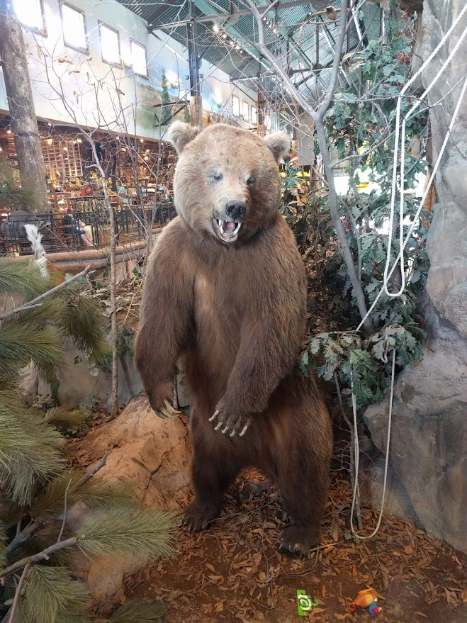 Bass Pro Taxidermy Bear