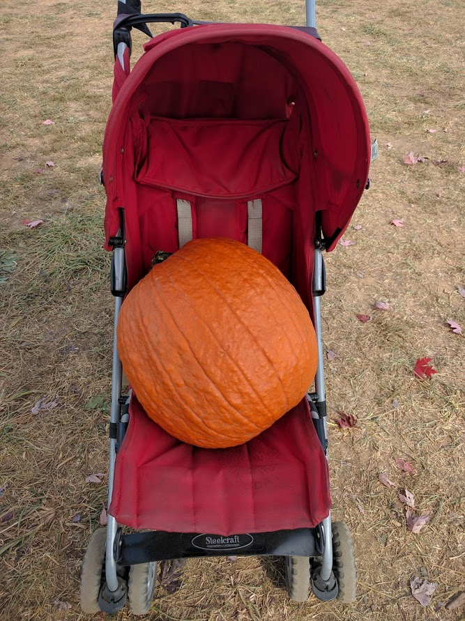 Pumpkin transportation