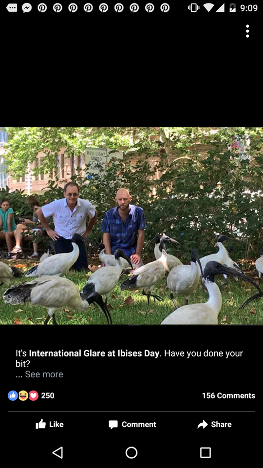 International Glare At Ibises Day