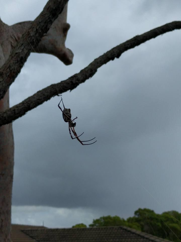 Nasty Australian Creatures